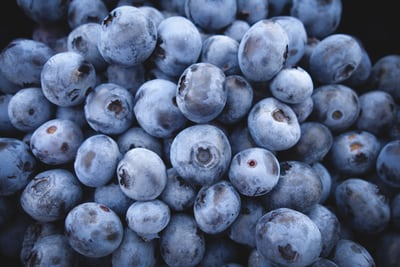 Antioxident blueberries for your service dog or emotional support dog