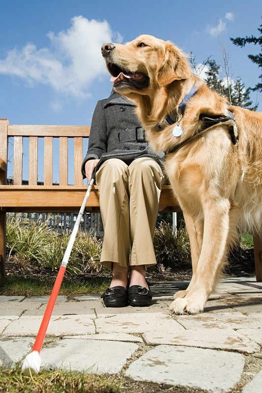 Blind Person with Golden Retriever