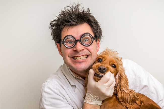 Choose the Right Veterinarian for Your Dog
