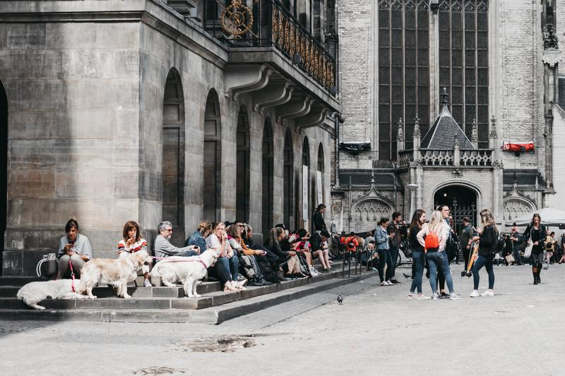 city with service dogs