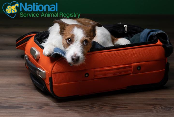 Cute Dog in Suitcase