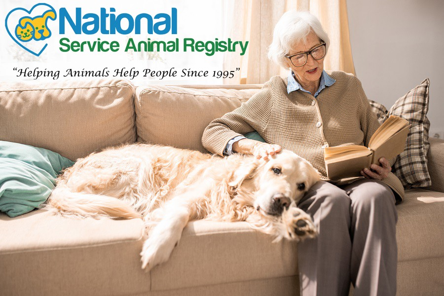 Elderly Lady with Dog on Couch