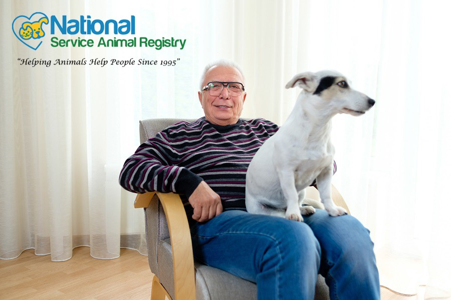 Elderly Man Sitting on Chair with Dog on Lap