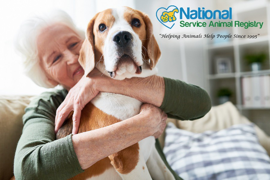Elderly Woman Sitting on Sofa Hugging Dog