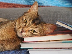 Emotional support animal laying head on books
