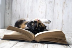 Emotional support cat on books
