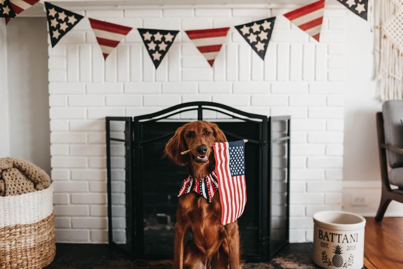 Emotional Support Dog with American Flag