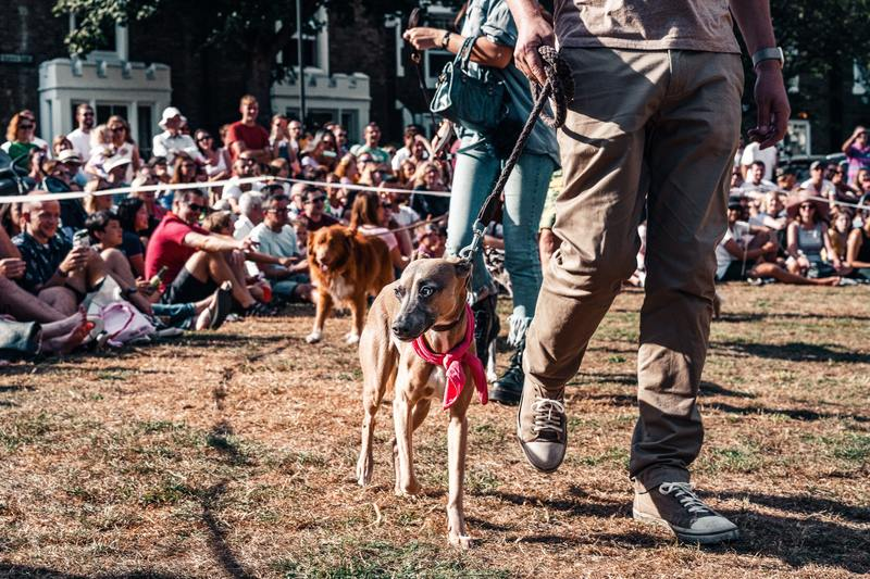 Find a reputable service dog breeder at a show