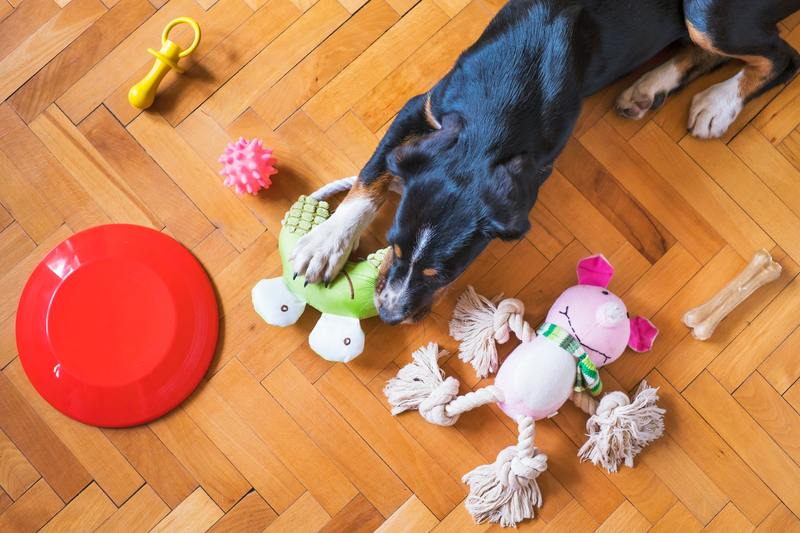 Have boundaries with your service dogs toys