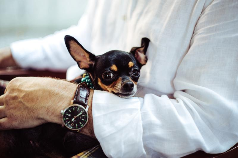 Insurance for your service dog