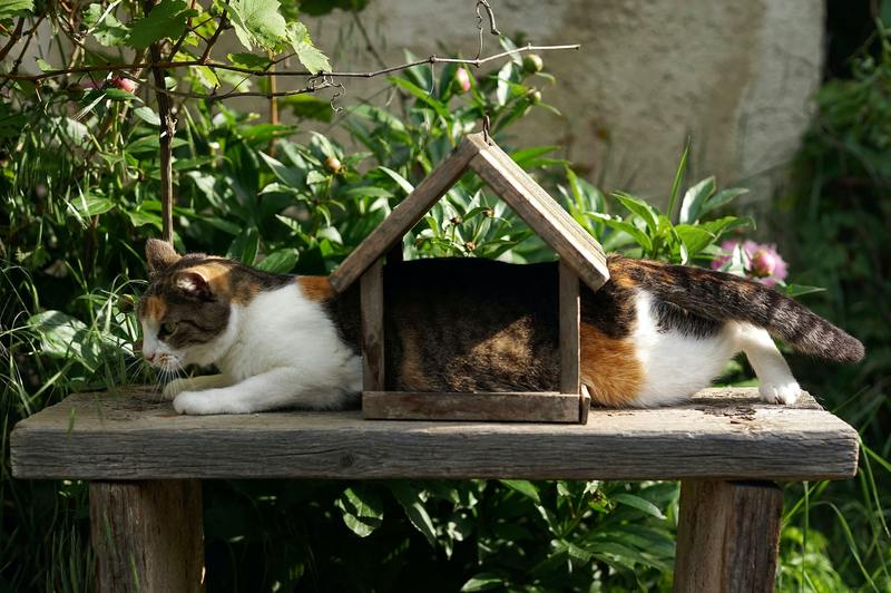 Keep your emotional support cat out of the garden