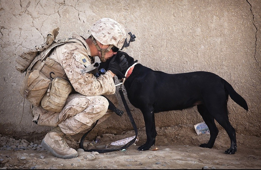 Person with Their Service Dog