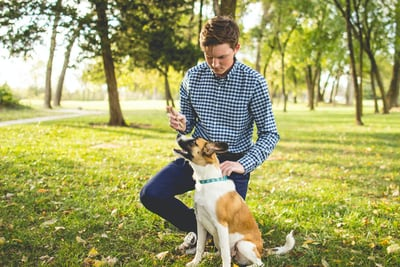 Remove a tick from your service dog with a tweezer