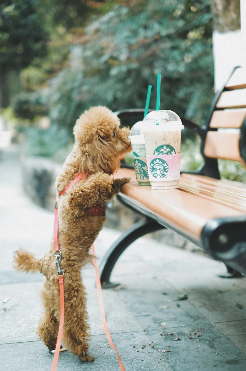 Service Dog and Coffee