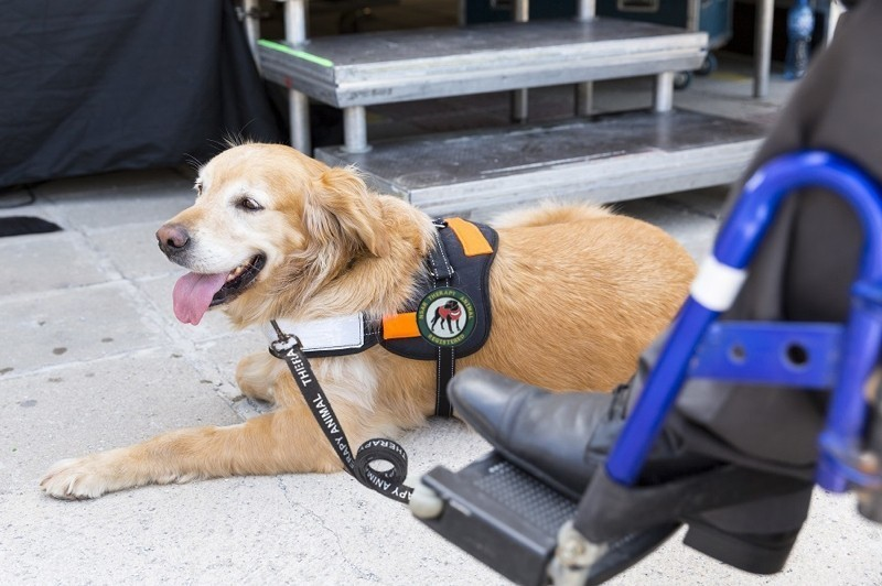 How Much Does A Service Dog Cost A Buyer S Guide For Your Service