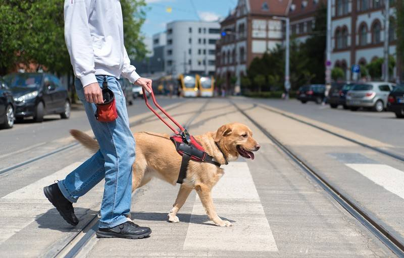 Service Dog Helping Man Cross Street