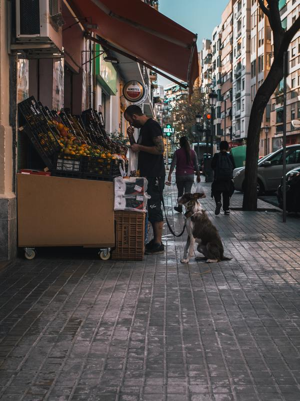 service dog shopping in the city