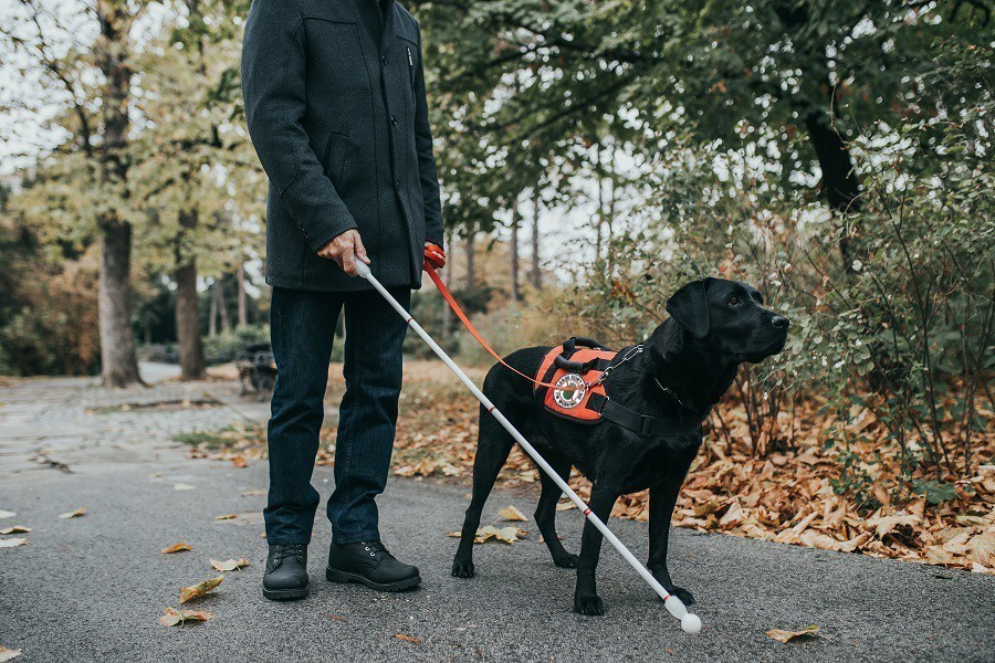 Service Dog Walking with Their Owner