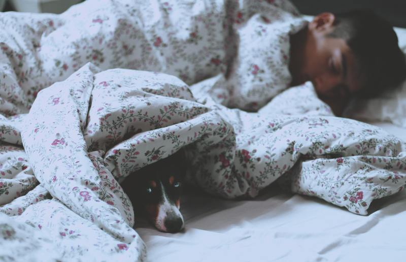 Sleeping with your service dog or emotional support animal