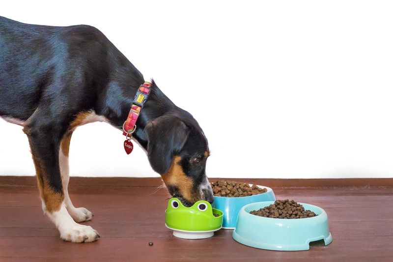 Use interactive dog bowls to slow a dogs eating habits