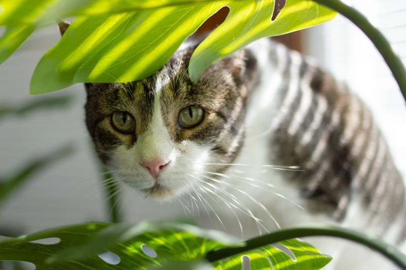 What Are Safe Plants for Emotional Support Cats
