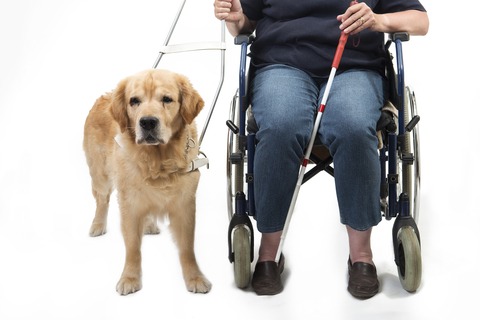 Service dog and wheelchair