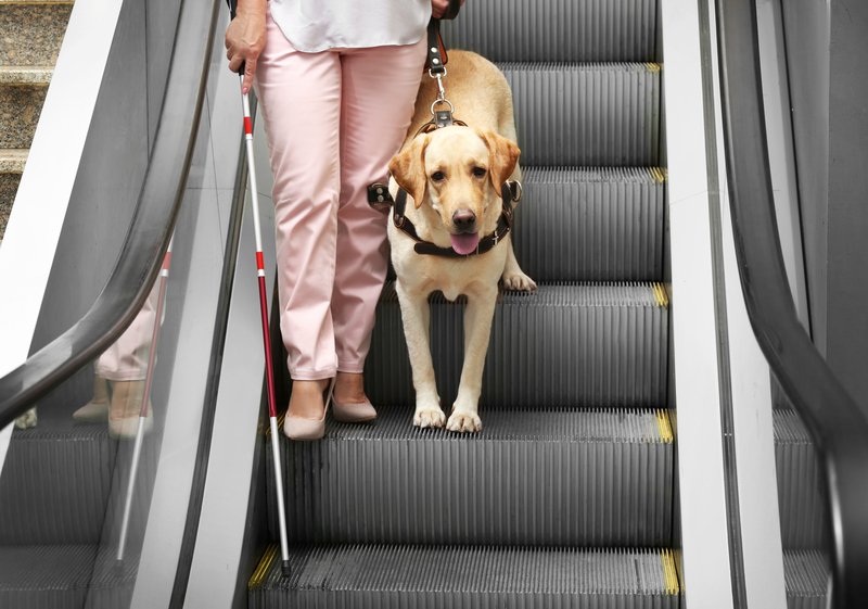 Service dog on escalator