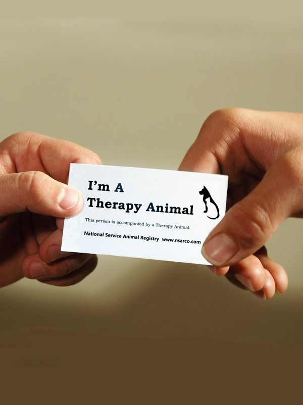 Therapy Animal Information Cards