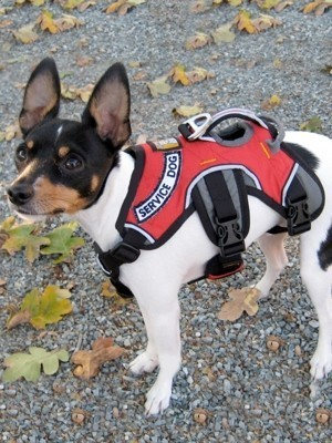 Red Service Dog Harness