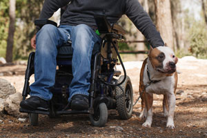 Man In Wheelchair With A Registered Service Dog