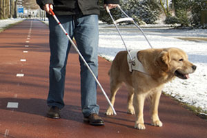 Blind Person Registered Service Dog